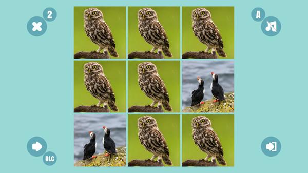 Bird couple 9 (DLC)