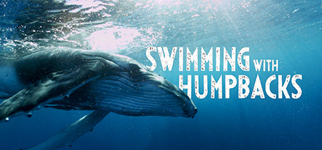 Swimming with Humpbacks