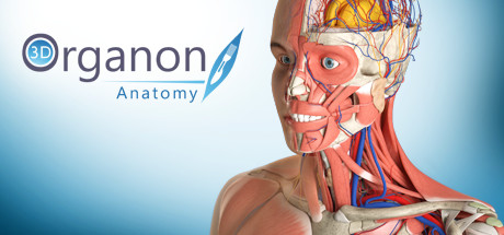 Купить 3D Organon Anatomy | Enterprise Edition