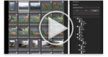 ACDSee 15 video