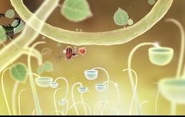 Botanicula video