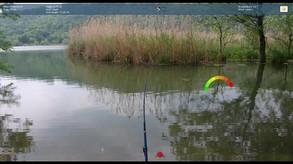 Truefish video