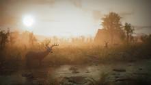 Morels: The Hunt video
