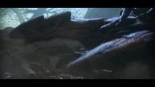 Warlander video