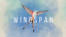 Wingspan video