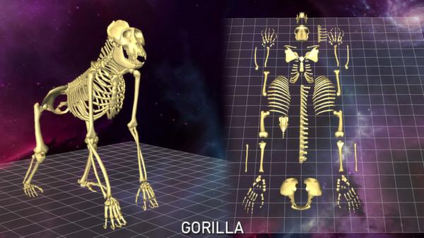 скриншот 5 Skeletons Pack 1