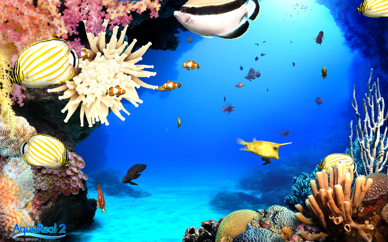 Digifish Aqua Real 2
