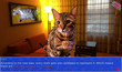 Cat President ~A More Purrfect Union~ Free Download
