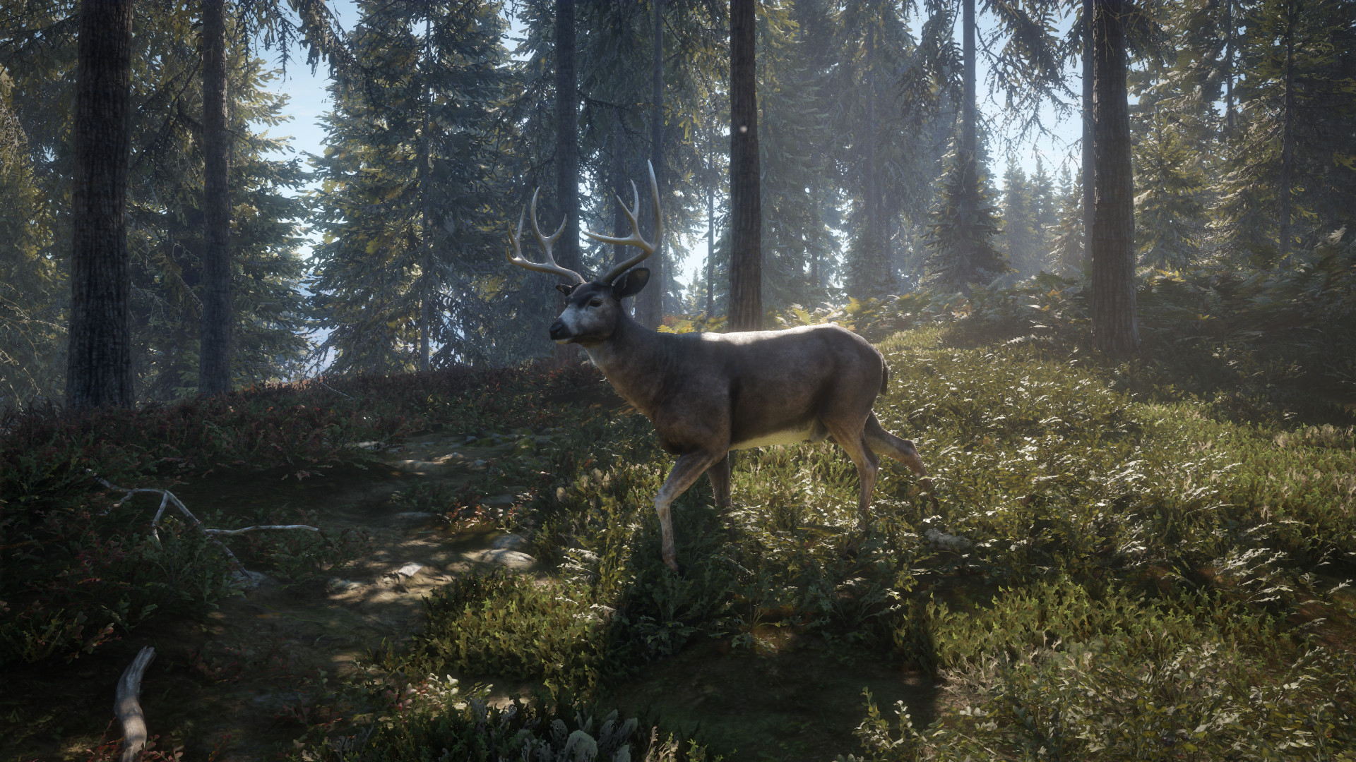 theHunter: Call of the Wild [2017|Rus|Eng|Multi9]