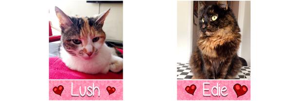 猫咪恋爱模拟游戏《完美约会(Purrfect Date)》 - 第8张  | 飞翔的厨子
