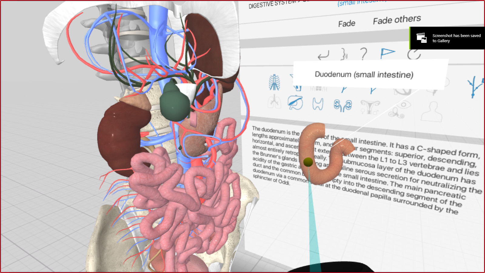 3d Organon Vr Anatomy On Steam