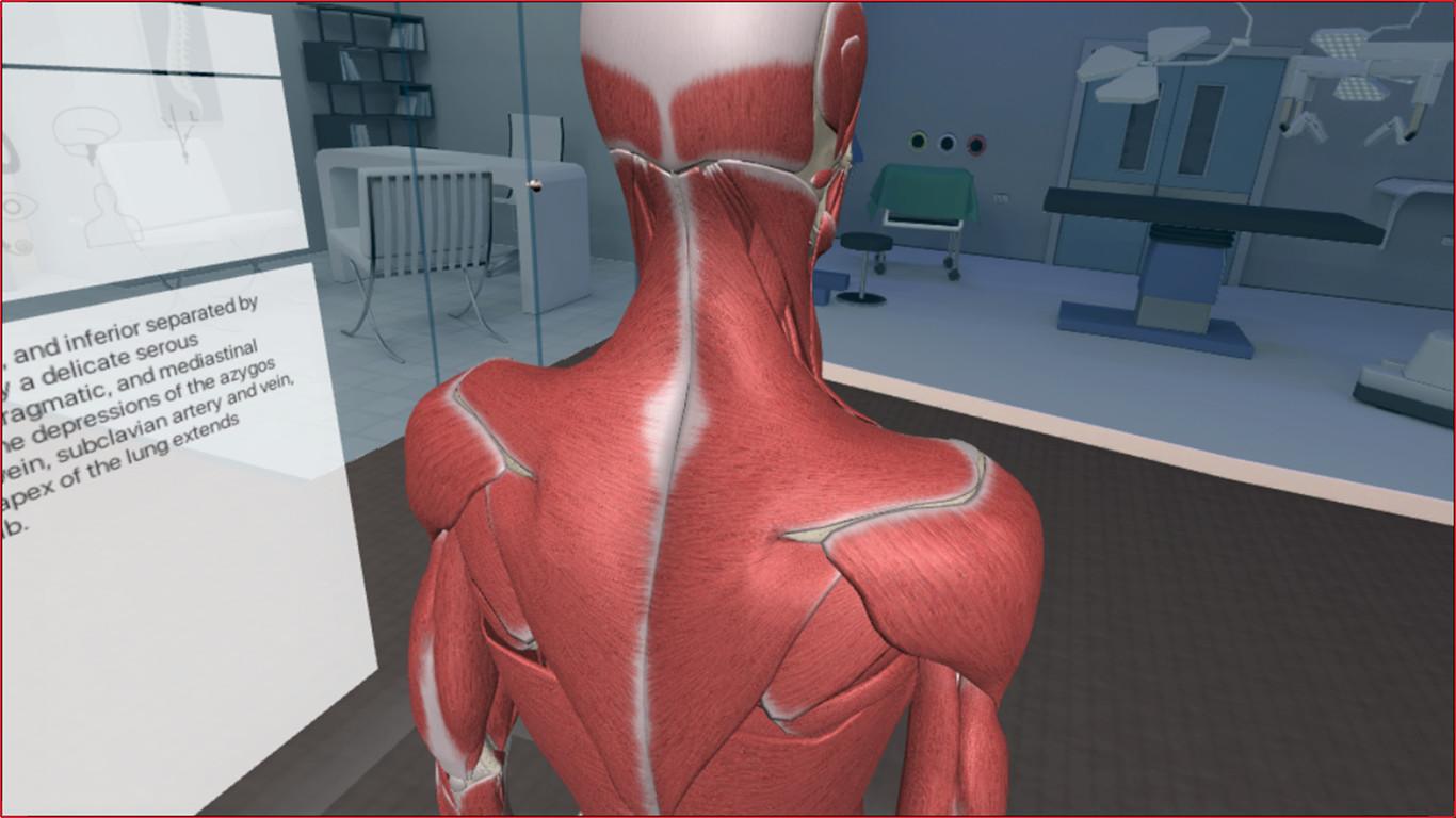 3d Organon Vr Anatomy Steamstat