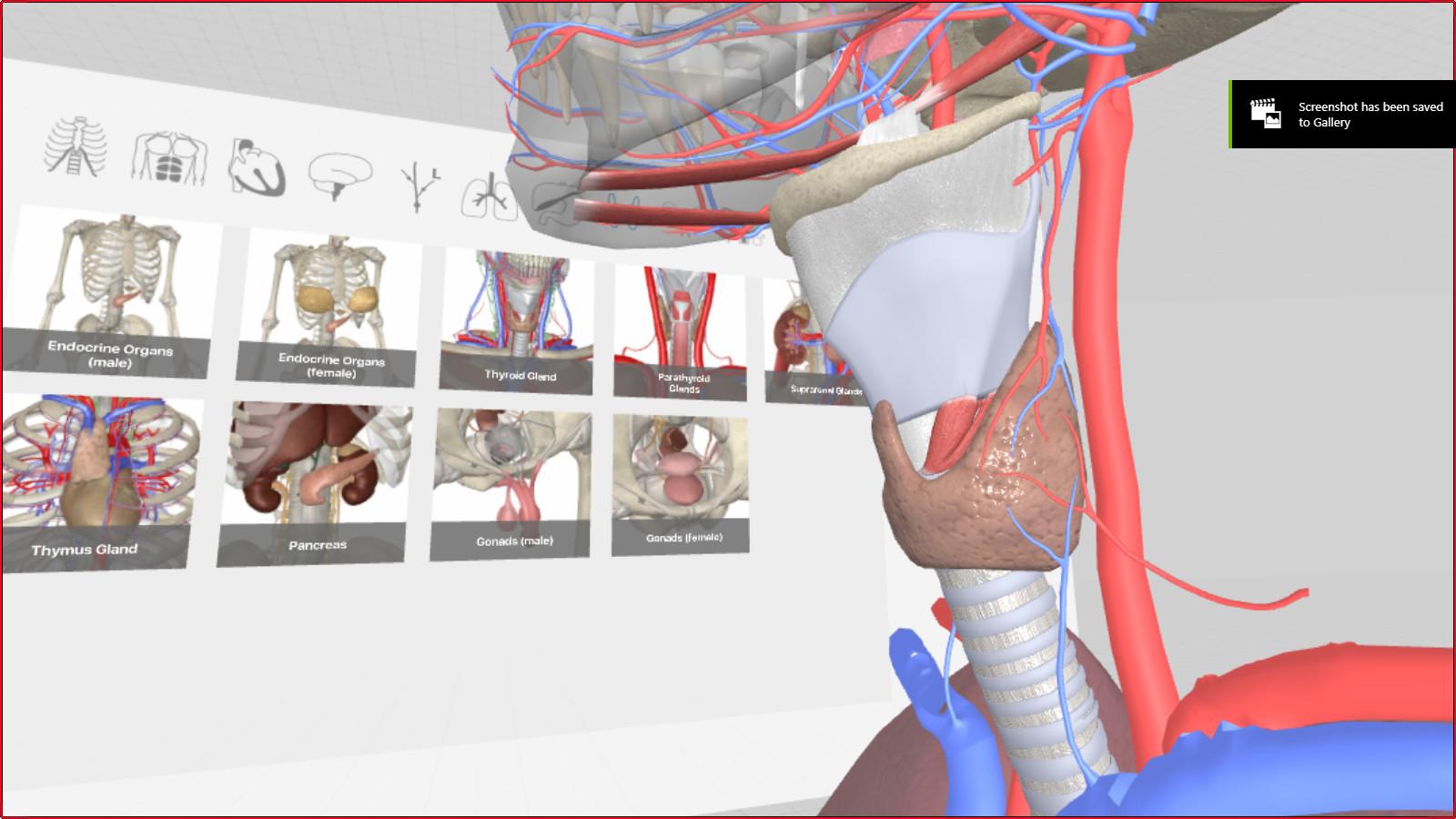 3d Organon Vr Anatomy On Steam