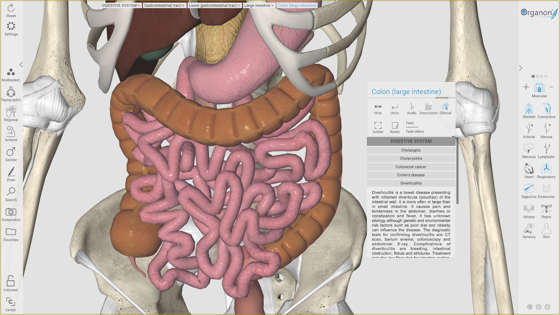 3d Organon Anatomy On Steam