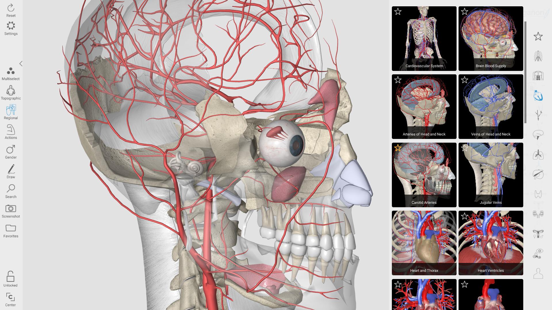 3D Organon Anatomy on Steam