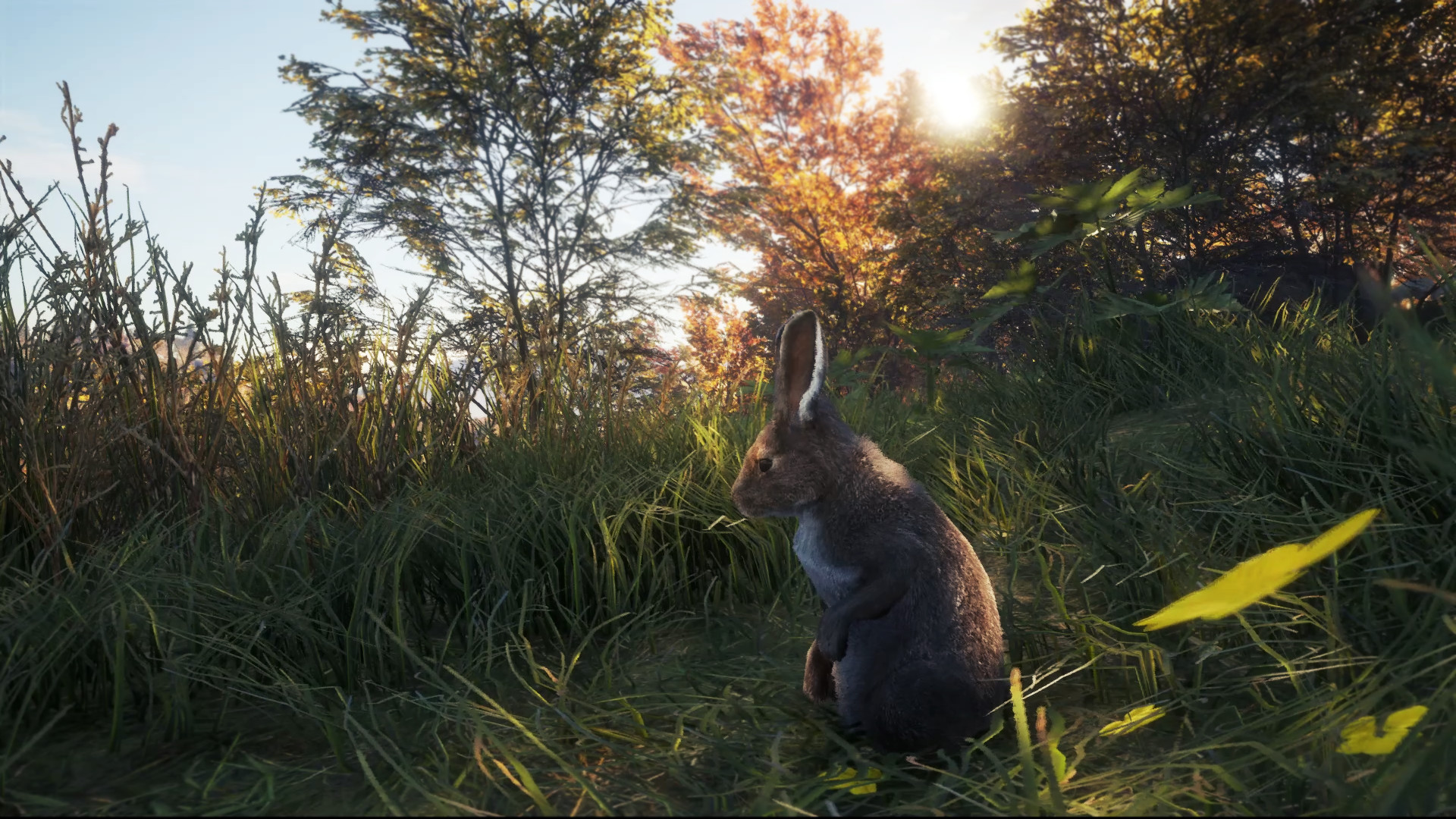 охота на зайца летом