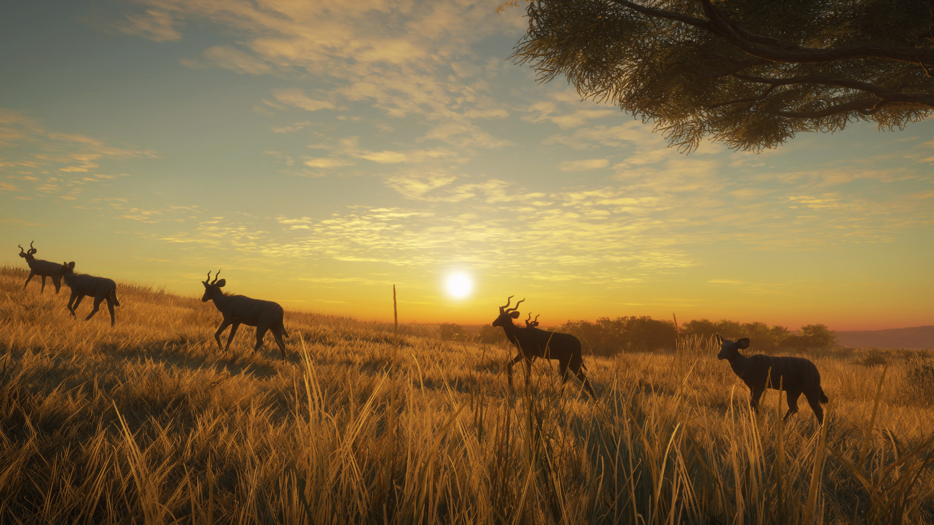 theHunter: Call of the Wild - Vurhonga Savanna Screenshot 3