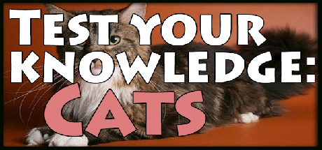Teaser image for Test your knowledge: Cats