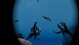 Scuba's Ocean Odyssey VR Umsonst herunterladen