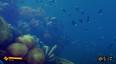 Deep Diving Simulator picture16