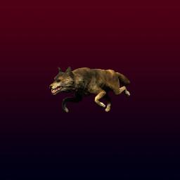 Wolf Victim