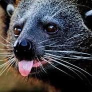 bearcat0611