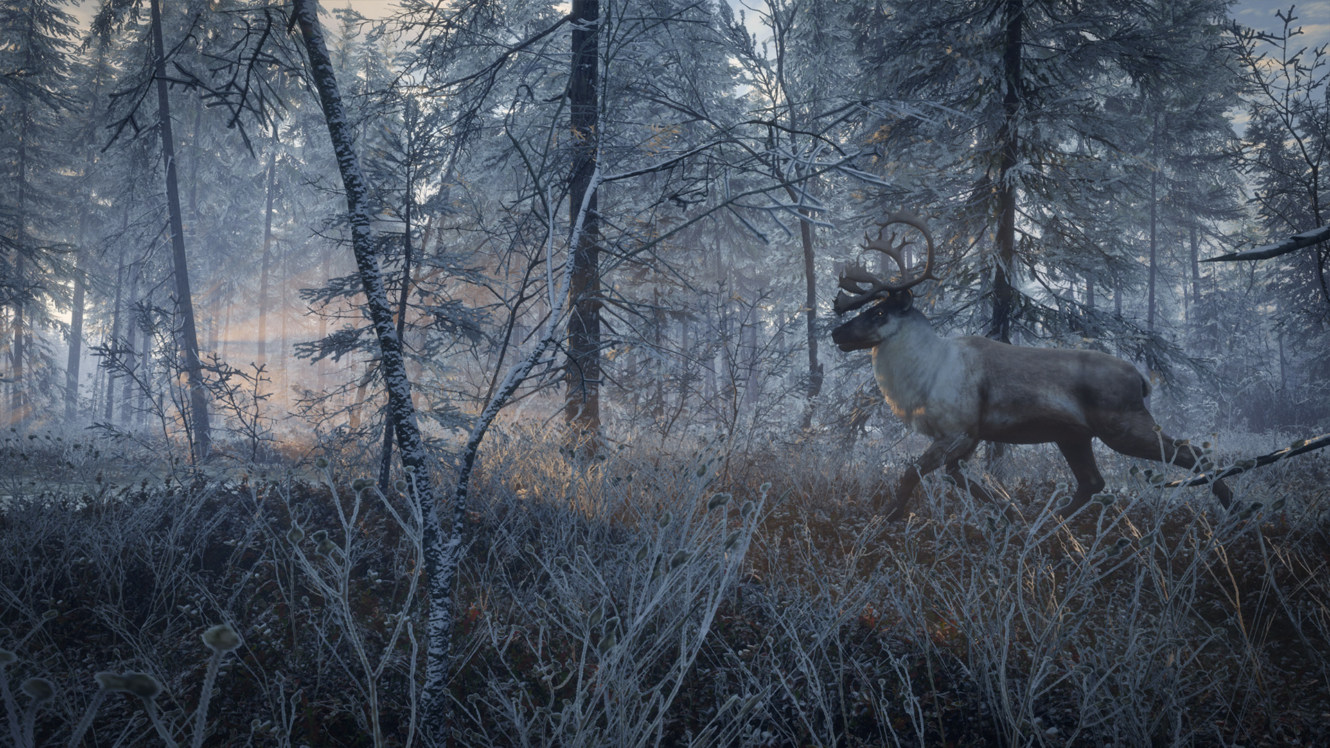 theHunter™: Call of the Wild :: Species List - Medved-Taiga