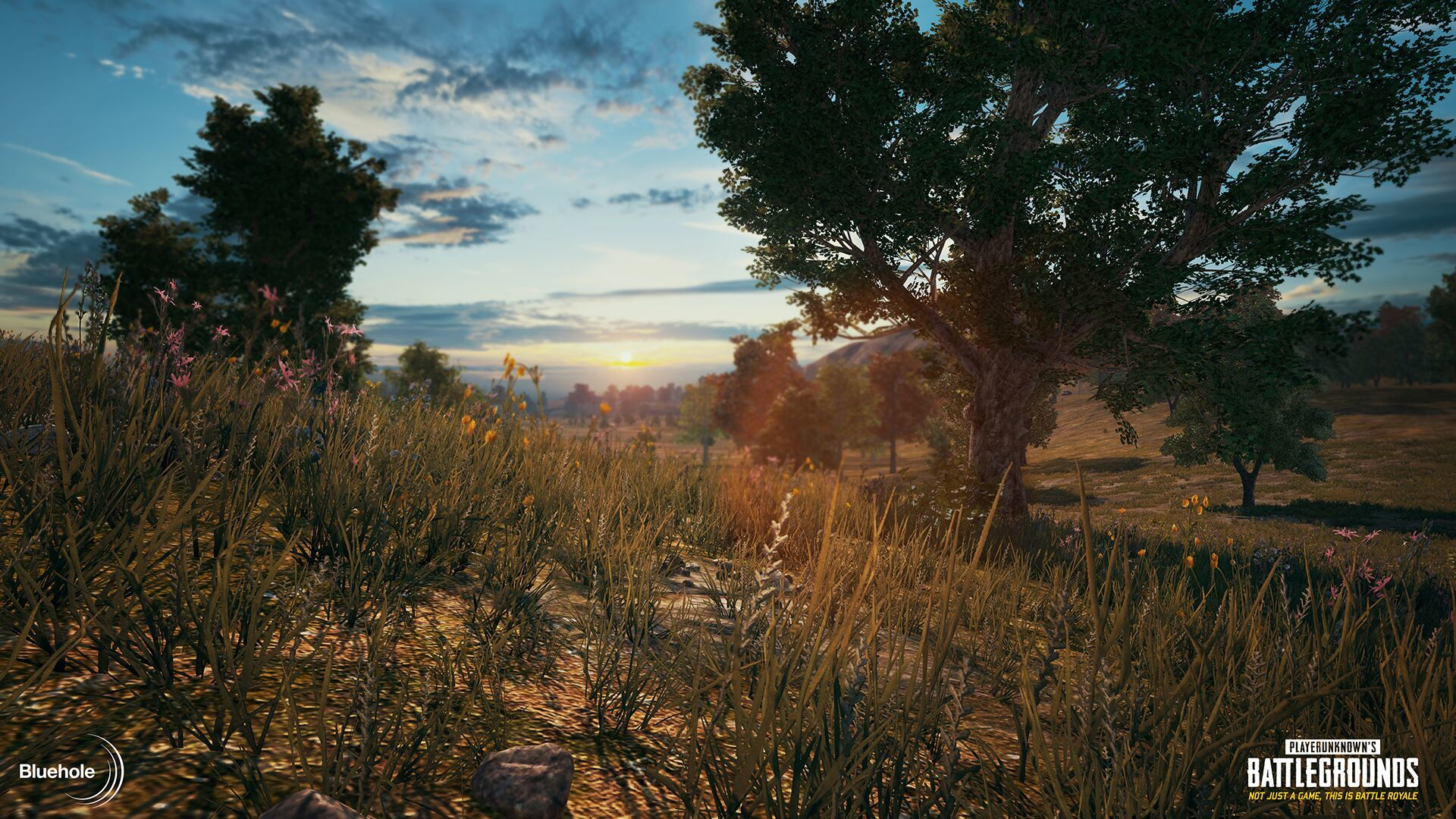 Guide For Pubg Mobile Hd Graphics Tool 2 5: PLAYERUNKNOWN'S BATTLEGROUNDS :: Early Access Week 21 Update