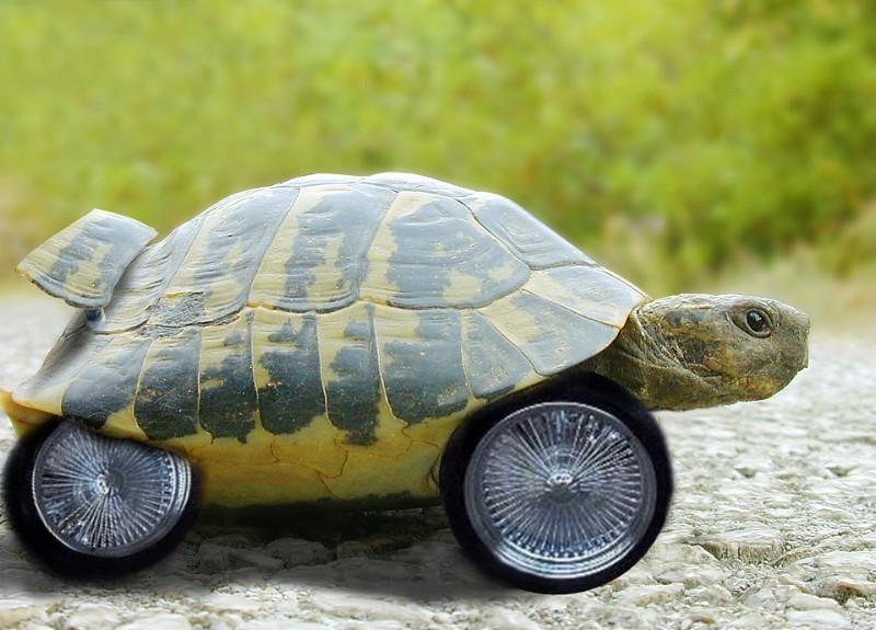 Черепаха на тракторе фото
