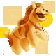 Goldy Zebra