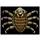 Arachnide Pulxis