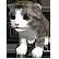 :minagame2_kitty: