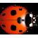 :ladybird: