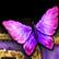 :rarebutterfly: