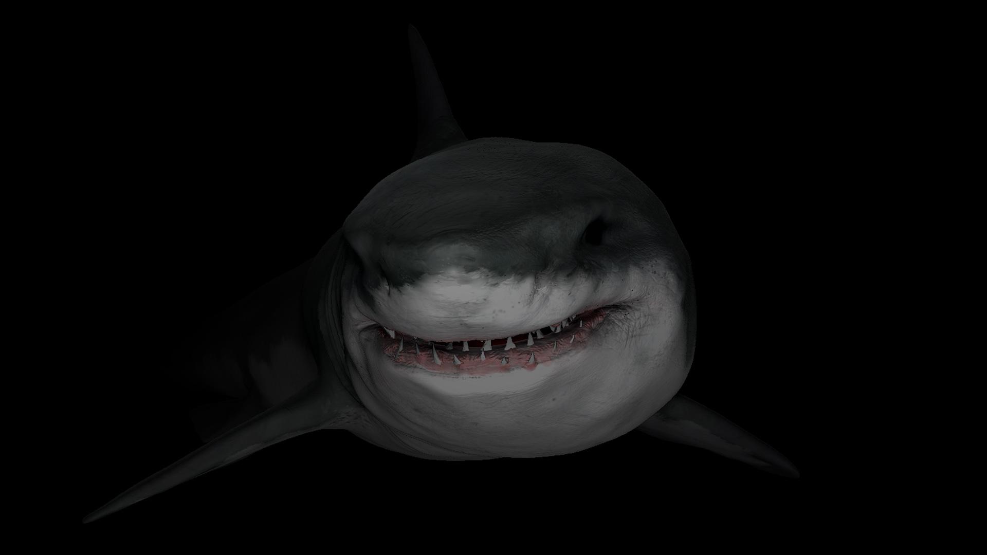 Card 2 of 5Artwork · Great White Shark