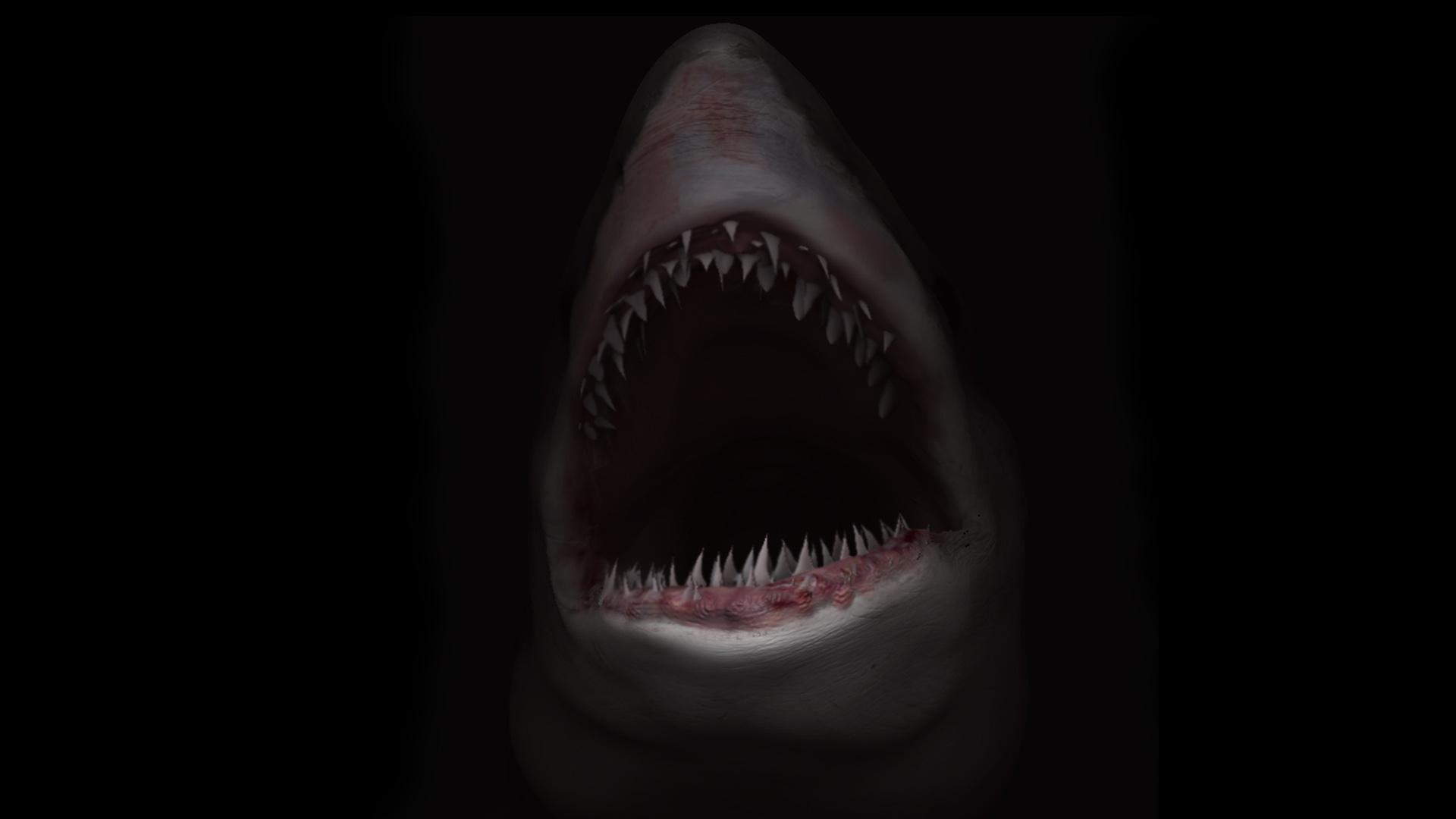 shark-bus-speed-dating