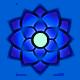 Sensing Lotus