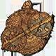 Compass Badge