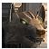 :wolfhead: