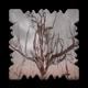 Tree death