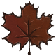 A Wild Maple Leaf Appears!