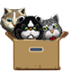 Three cats in the box