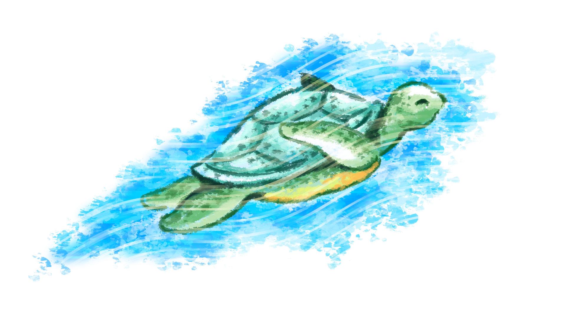 Wonderful Exceptionnel Card 1 Of 5Artwork · Sea Turtle