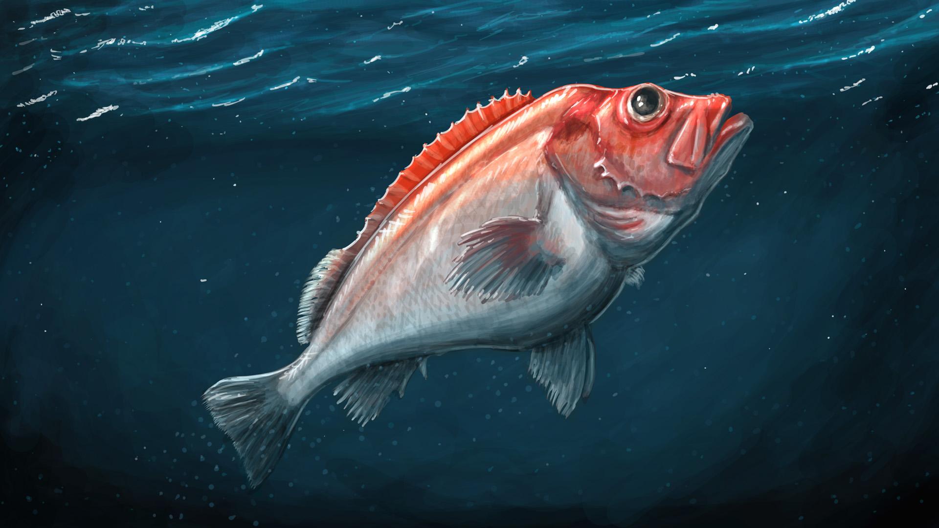 Showcase :: Fishing: Barents Sea