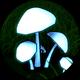 Unusual Mushroom
