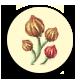 Four magic flowers