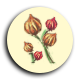 Five magic flowers