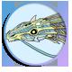O-Balon Badge