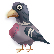 :dove_bird:
