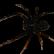 :little_spider: